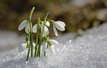 V DSJ jsme vítali jaro