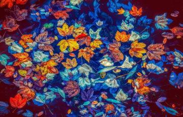 22. 9. 2020 – Vítání podzimu v DSJ