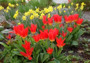 Vítání jara bude – hurá!