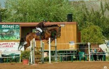 Závody koní na Zálesí s klienty DSJ